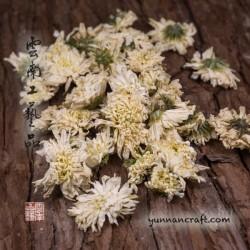 Yunnan Chrysanthemum