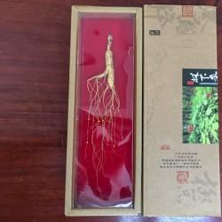 Panax Ginseng Root - small