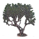 Старые чайные арбор деревья