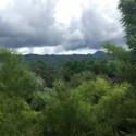 Yunnan Oolong