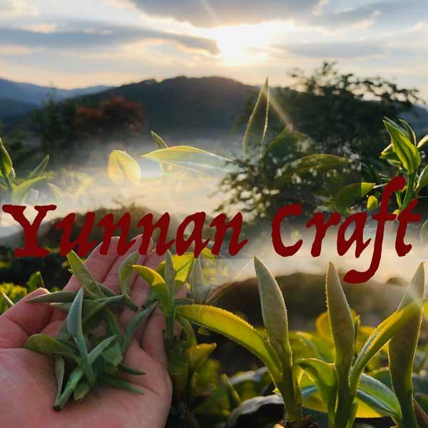 Jinggu tea plantation