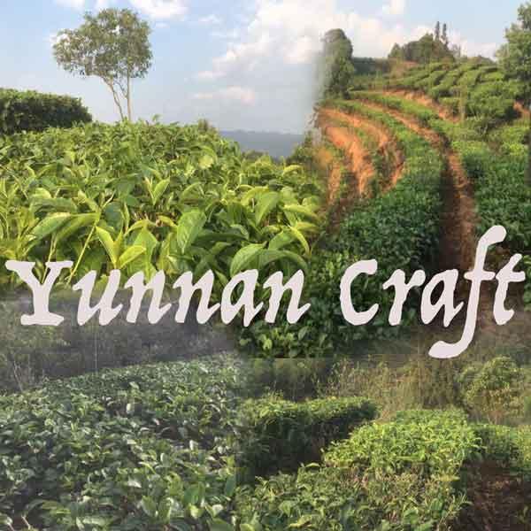 Ku Zhu Shan tea plantations