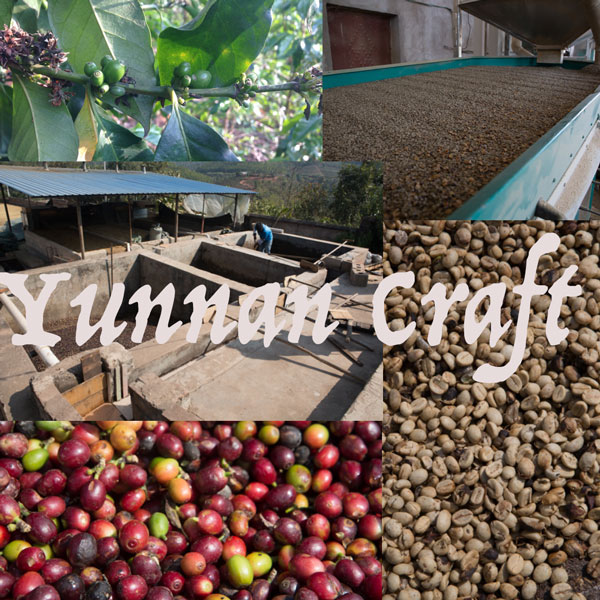 Small Yunnan Coffee Factory in Simao