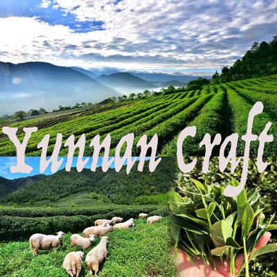 Tengchong volcanic mountain tea plantations