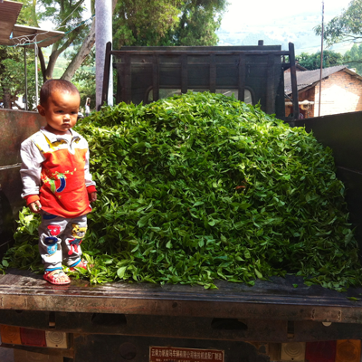 Tea wholesale