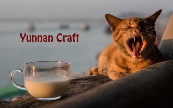 Myanmar Cat